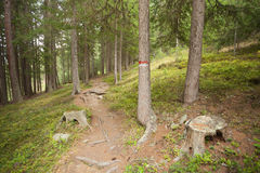 Hiking alone long a small mountain path inside the forest Royalty Free Stock Photos