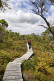 Hiking along a boardwalk Royalty Free Stock Image