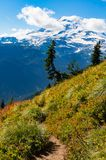 Hiking along Mount Rainier in the late summer Stock Photography