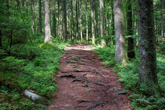 Hiking along a path in the Black Forest, Germany Stock Photos