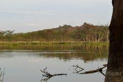 Lake against a mountain background, Lake Elementaita royalty free stock images