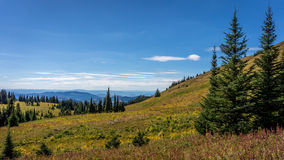 Hiking through alpine meadows and coniferous trees Stock Image
