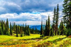 Hiking trails on Tod Mountain near the village of Sun Peaks of British Columbia, Canada. Hiking through the alpine meadows in fall colors on Tod Mountain near stock images
