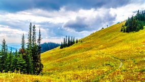 Hiking trails on Tod Mountain near the village of Sun Peaks of British Columbia, Canada. Hiking through the alpine meadows in fall colors on Tod Mountain near royalty free stock images