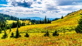 Hiking trails on Tod Mountain near the village of Sun Peaks of British Columbia, Canada. Hiking through the alpine meadows in fall colors on Tod Mountain near stock photos