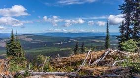 Hiking through alpine meadows and fallen trees Stock Photos