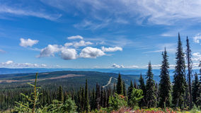 Hiking through alpine meadows and fallen trees Royalty Free Stock Images