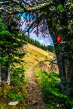 Hiking through alpine meadows in the high alpine near the village of Sun Peaks Stock Photo