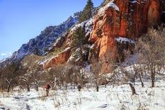 Hiking in Arizona in winter. Hikers on West Fork Trail in Oak Creek Canyon near Sedona, Arizona in winter Stock Image