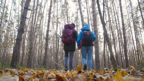 Hiking and Backpacking concept. Young Couple of travelers walking in forest in autumn day stock video footage