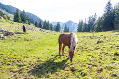 Hiking in Bavaria Stock Image