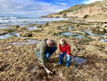 Father and son exploring Cabrillo Tide pools San Diego. Hiking on the beach and exploring tide pools San diego southern california stock image