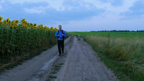 Hiking through the beautiful places of Russia. A man walks along the path next to sunflowers stock footage