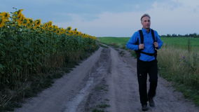 Hiking through the beautiful places of Russia. A man walks along the path next to sunflowers HD stock video footage