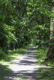 Lehigh Valley Trail in the summer. Hiking and biking trail in New York State. Part of the 90 mile trail in Scottville, NY stock images