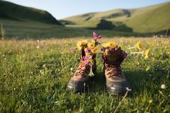 Hiking boots with beautiful flowers stock photo