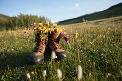 Hiking boots with beautiful flowers royalty free stock photography
