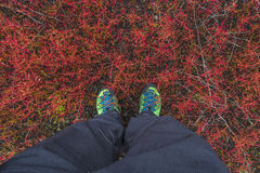Hiking boots dove into tundra plants at Iceland, summer time Royalty Free Stock Photos