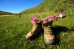 Hiking boots with flowers royalty free stock images
