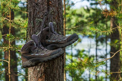 Hiking boots hanging on a tree in the forest Stock Photo