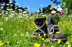 Hiking boots meadow nature Stock Photography
