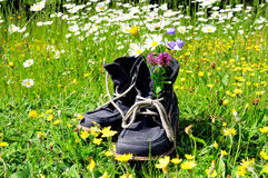 Hiking boots meadow nature Royalty Free Stock Image