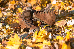 Hiking boots, well worn and muddy on the forest floor. Royalty Free Stock Images
