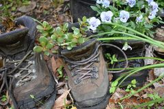 Hiking boots. Worn out hiking boots repurposed into flower container Stock Photo