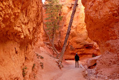 Hiking Bryce Canyon Stock Image