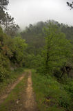 Hiking in Cinque Terre nature trail Stock Photography