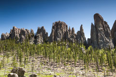 Hiking in Custer State Park, South Dakota Royalty Free Stock Photography