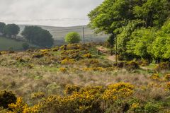 Dartmoor fields and meadows. Hiking in the Dart river valley in the Dartmoor in Devon, England royalty free stock photos