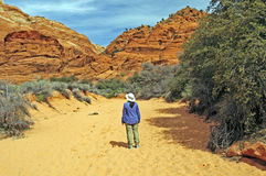 Hiking into a Desert Canyon Royalty Free Stock Photo