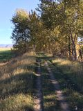 Hiking down the kamloops airport trail. Hiking down a scenic summer trail Stock Photography
