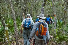 Hiking in the Everglades Royalty Free Stock Photography