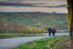 Hiking excursion between vines in autumn stock photography