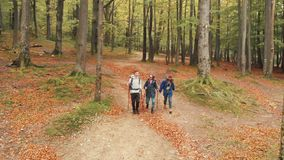Hiking in Fall Woods. Group of friends going hiking in fall forest, walking with poles cheerfully on footpath full of dry brown leaves stock video