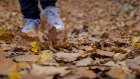 Hiking through the fallen leaves. In autumn forest Royalty Free Stock Images