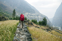 Hiking in the Farmlands. A hike walks across a wall path between small wheat farms in Tiger Leaping Gorge in Yunnan Province, China Royalty Free Stock Photo