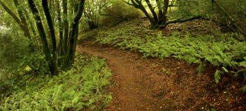 Hiking through ferns Stock Image