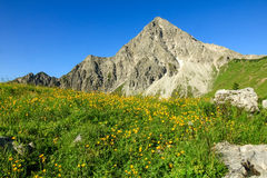 Hiking on flower meadow and high mountain in spring. Hiking on flower meadow and steep mountain Geisshorn. Springtime or summer in the alps Royalty Free Stock Images