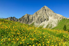 Hiking on flower meadow and steep mountain in spring. Hiking on flower meadow and steep mountain Geisshorn. Springtime or summer in the alps Royalty Free Stock Photography