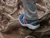 Hiking in the forest. A step over the roots in a forest Stock Image