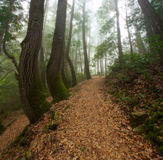Hiking in the Forest Royalty Free Stock Photography