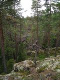 Hiking in the forest in the middle of Finland. royalty free stock photos