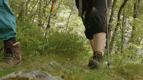Hiking in forest of Norway stock footage