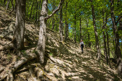 Hiking on a forest trail Royalty Free Stock Images