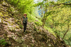 Hiking on a forest trail Stock Photography