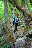 Hiking on a forest trail Stock Image