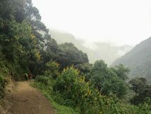 Hiking through the forests of Peru on the way to Machu Picchu al royalty free stock photo
